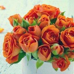 orangeroses12